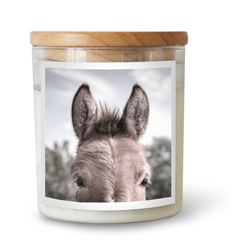 CANDLE | Donkey by The Commonfolk