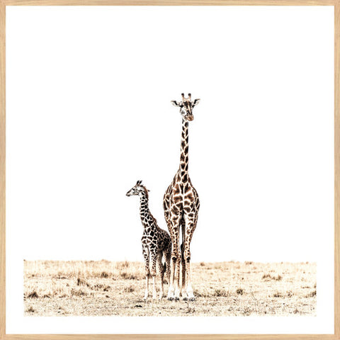 ART PRINT | Giraffe Duo by Blackhaus Studios