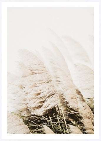 ART PRINT | Pampas by Blackhaus Studios