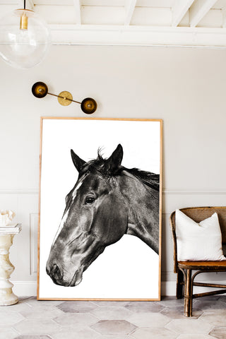 ART PRINT | Photographic Print Black & White Hores by Kara Rosenlund
