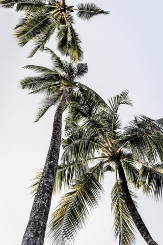 ART PRINT | Palm 6 by Denise Rix