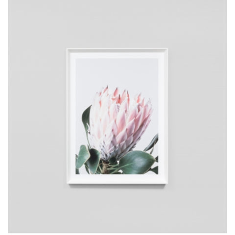 ART PRINT | framed 'native protea' photographic print