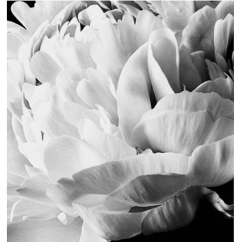 ART PRINT | framed 'peony bloom' photographic print