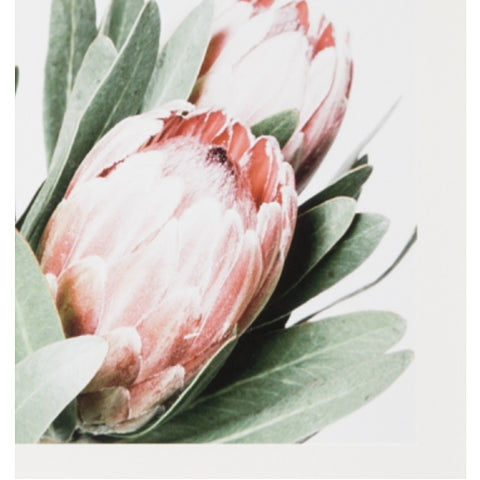 ART PRINT | framed 'protea' photographic print
