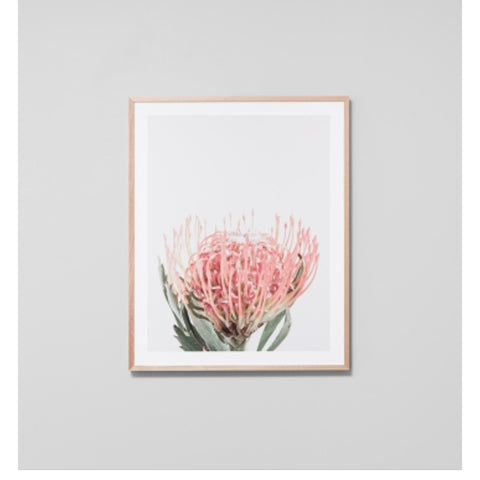 ART PRINT | framed 'protea bloom blush' photographic print