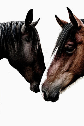 ART | Photographic Print Wild Horses by Kara Rosenlund