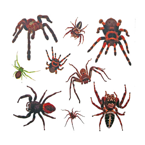 Halloween Spiders Temporary Tattoo animal, colour, halloween, spider, tattoo, themed