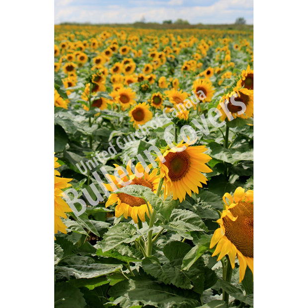 Bulletin: Sunflower Field (Package of 50)