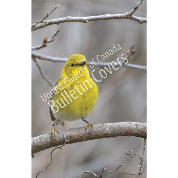 Bulletin: Pine Warbler (Package of 50)