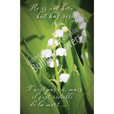 Bulletin: Lily of the Valley (Package of 50)