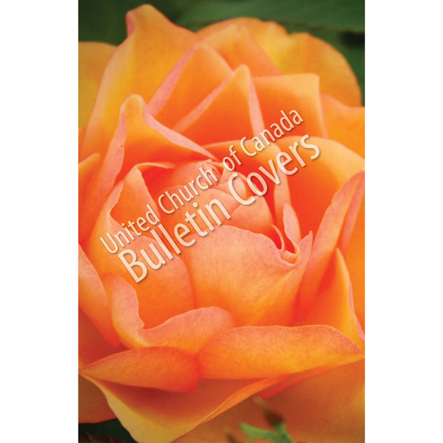 Bulletin: Rose (Package of 50)