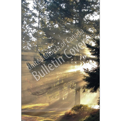 Bulletin: God Light (Package of 50)