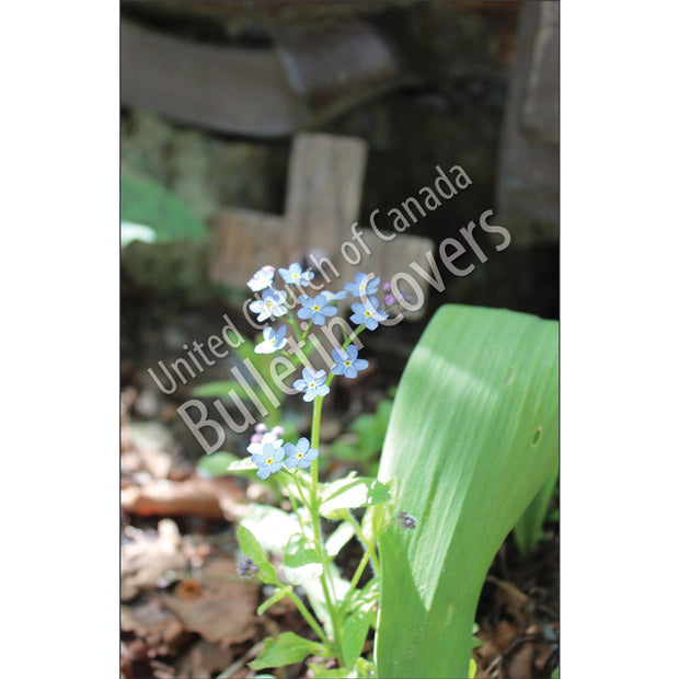 Bulletin: Forget-Me-Nots and Cross (Package of 50)