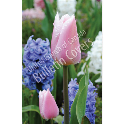 Bulletin: Tulips and Hyacinths (Package of 50)