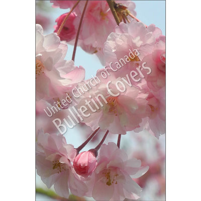 Bulletin: Flowering Cherry (Package of 50)
