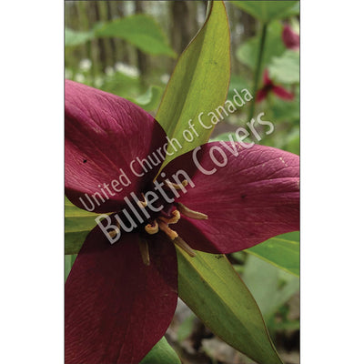 Bulletin: Red Trillium (Package of 50)
