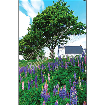 Bulletin: PEI Lupines (Package of 50)