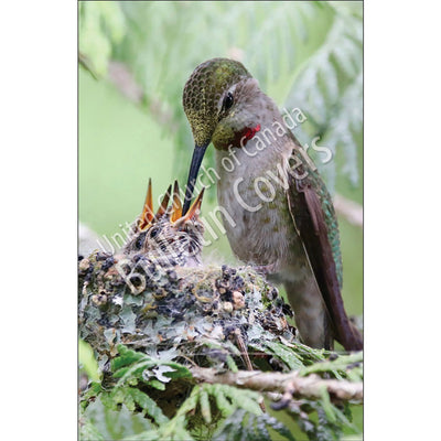 Bulletin: Hummingbird Family (Package of 50)