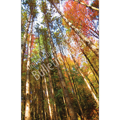 Bulletin: Majestic Trees (Package of 50)