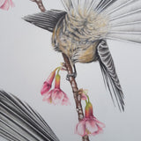 SOLD Spring Fantails ORIGINAL