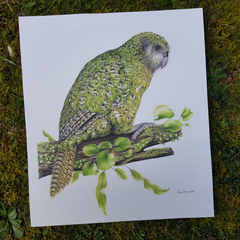 SOLD Kākāpō ORIGINAL