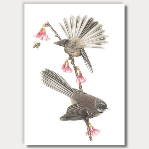 NEW! Spring Fantails