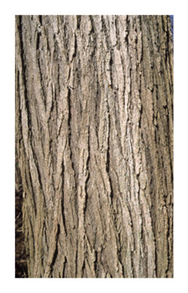 Slippery Elm inner bark 2 oz. Bulk Herb