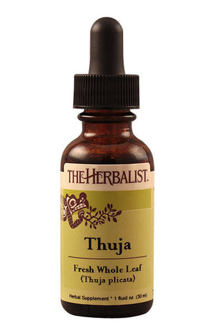 Thuja leaf Liquid Extract