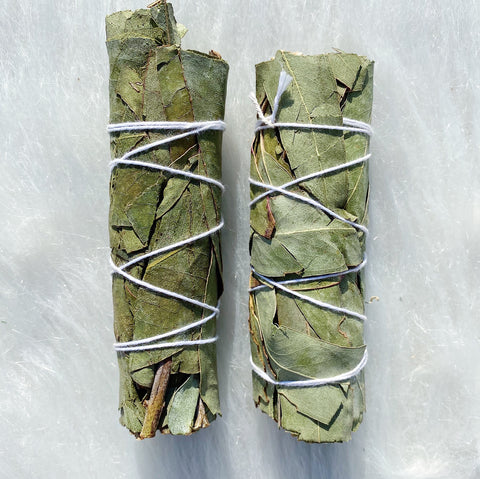 Eucalyptus Bundle