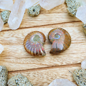 Opalized Ammonite S