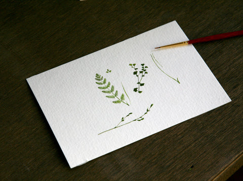 Tiny watercolor ferns and greens by Felix Fu.