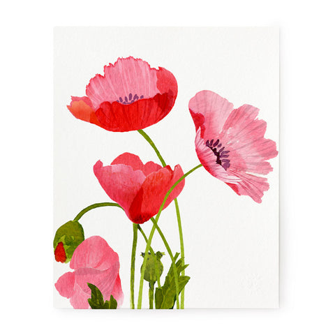 Pink Poppies - Art Print