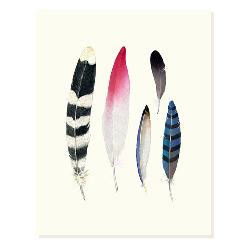 Feather Collection - Occasion Card