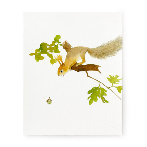Aww Nuts - Art Print