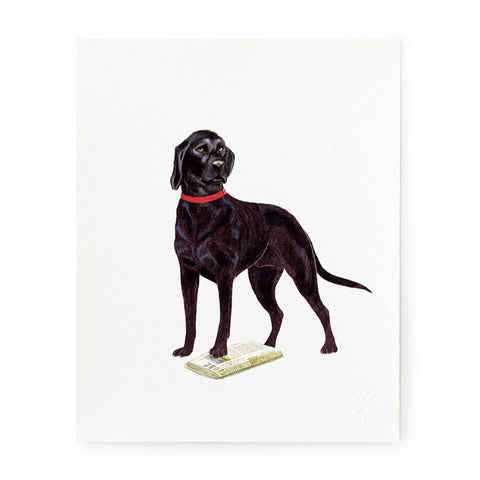 Black Lab - Art Prints