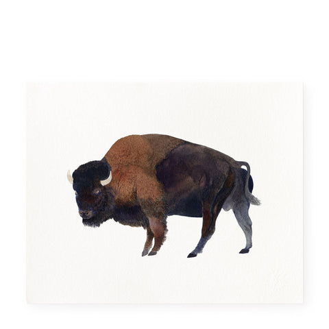 Buffalo - Art Prints