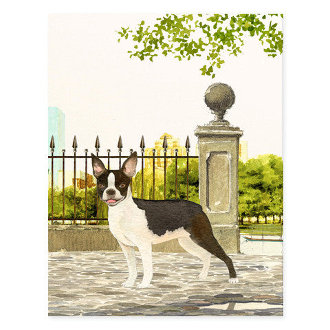 Boston Terrier - Occasion Card