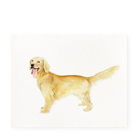 Golden Retriever - Art Prints