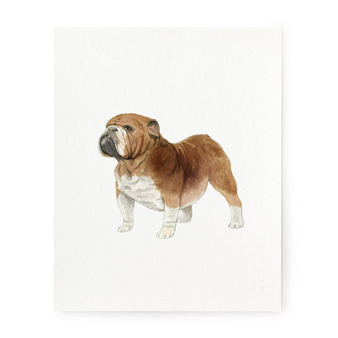 English Bulldog - Art Prints
