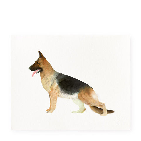 German Shepherd - Art Prints
