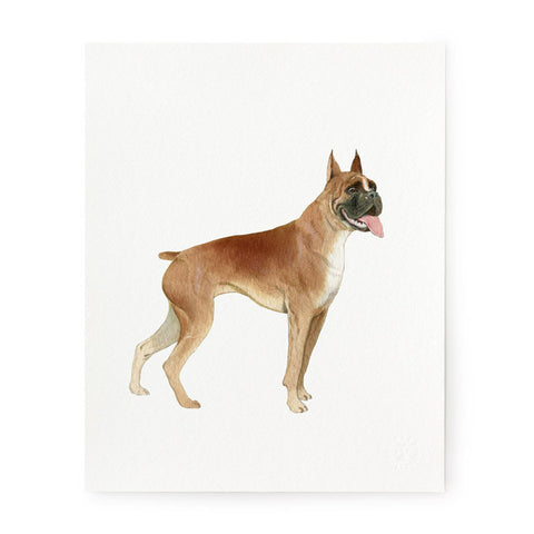 Boxer Bulldog - Art Prints