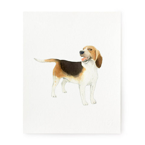 Beagle - Art Prints