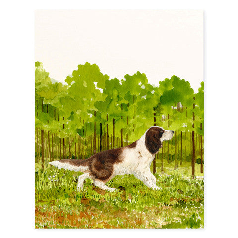 English Springer Spaniel - Occasion Cards