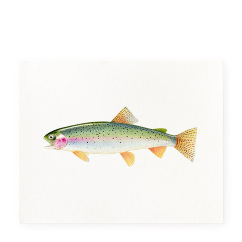 Rainbow Speckled Trout - Art Prints