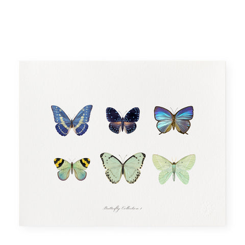 Butterfly Collection I