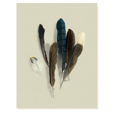 Feather Collection 2