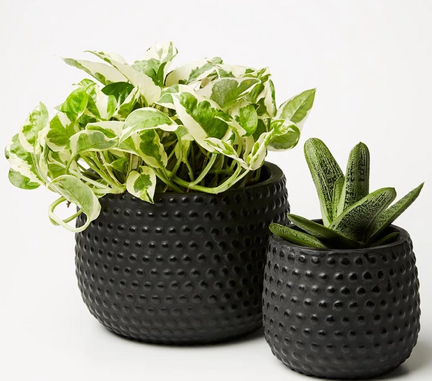 Jones & Co. - Hobnail Planter Set