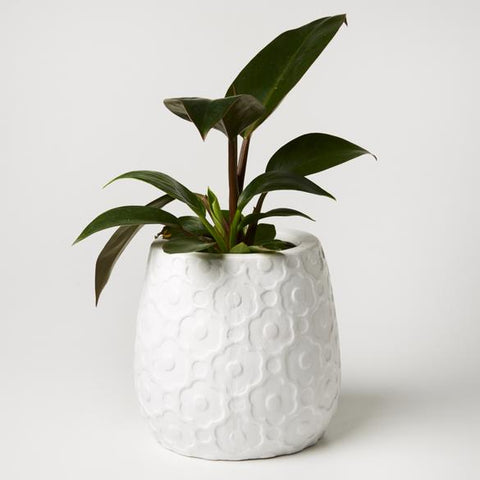 Jones & Co - White Ditsy Planter