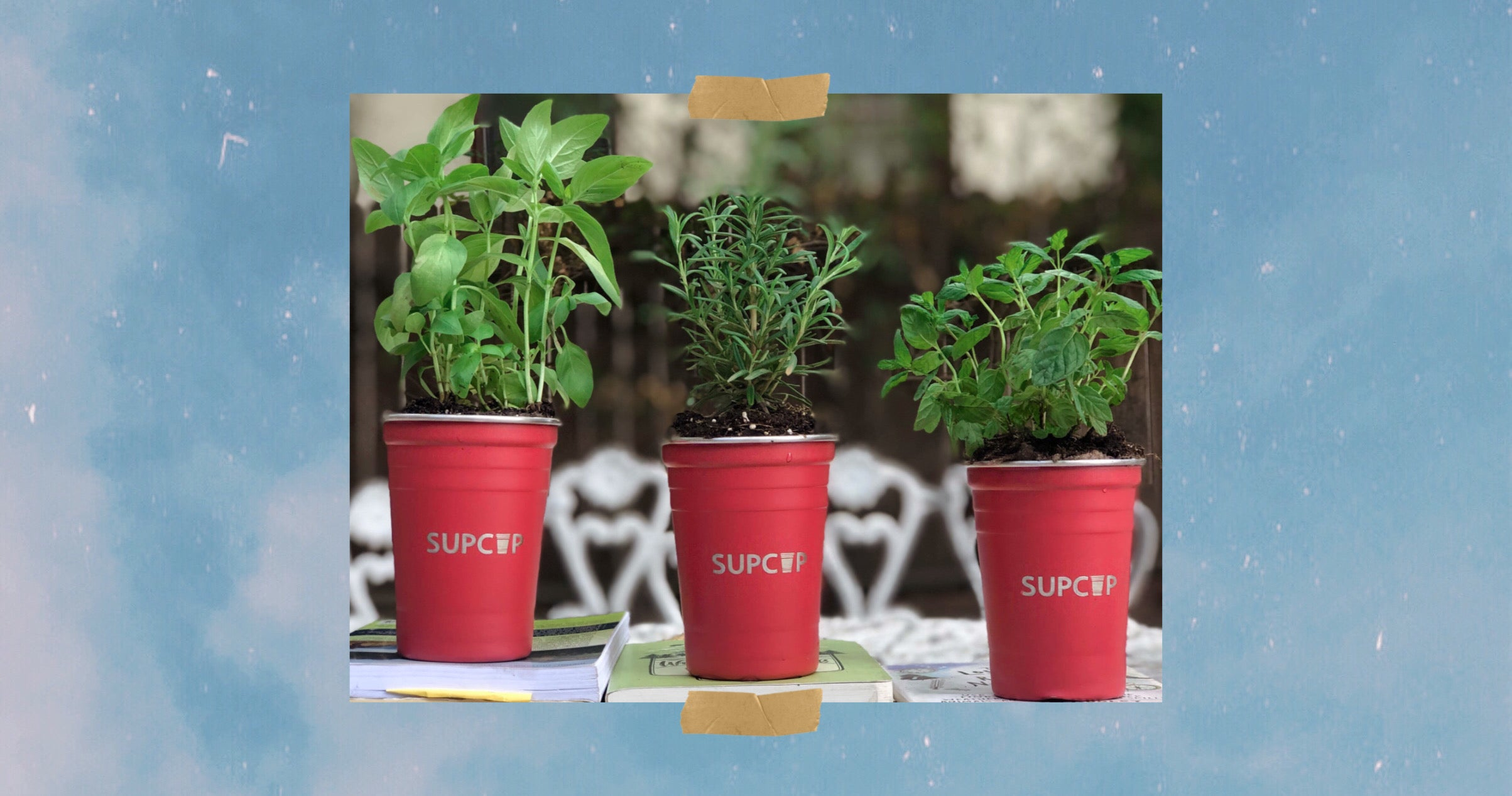 supcups red party cups filled with growing herbs