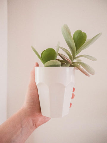 plant jar by mimi and august